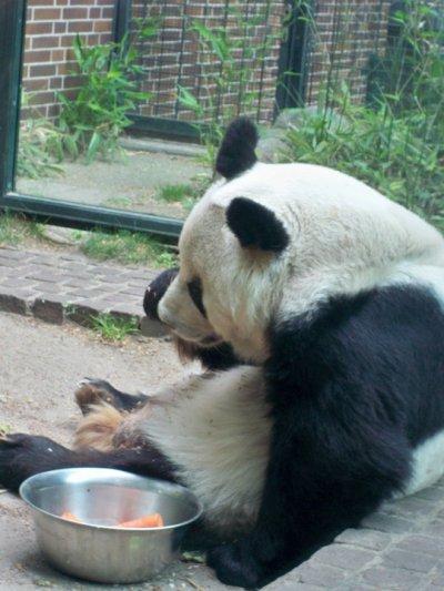 il mitico Panda :)